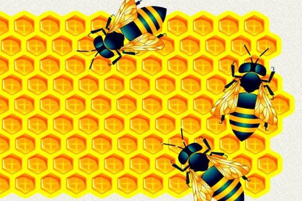 Honey bees die immediately post-sex.