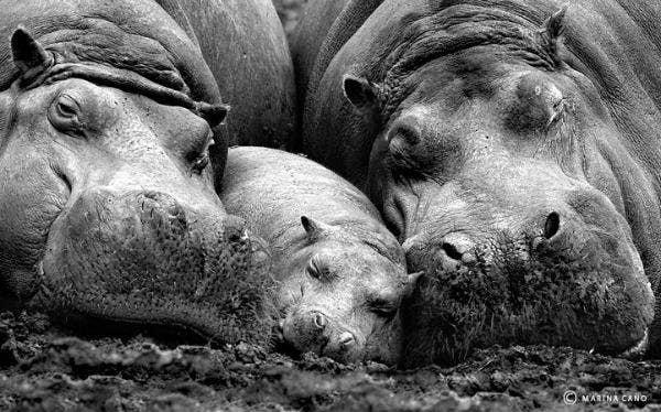 "<a href=""http://1000cutethings.tumblr.com/post/18817630222/295-cute-wildlife-photos"" target=""_blank"">1000cutethings.tumblr.com</a>"