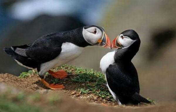"<a href=""http://www.smoothfm.com.au/gallery/animals-love"" target=""_blank"">smoothfm.com.au</a>"