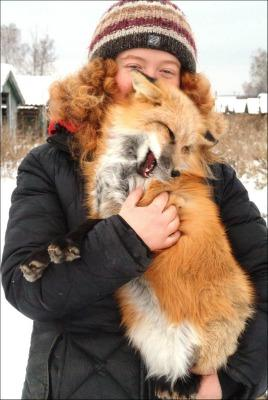 """<a href=""""http://siberiantimes.com/science/casestudy/features/how-i-trained-my-fox-called-anna-to-be-like-a-household-pet-dog/"""">siberiantimes.com</a>"""
