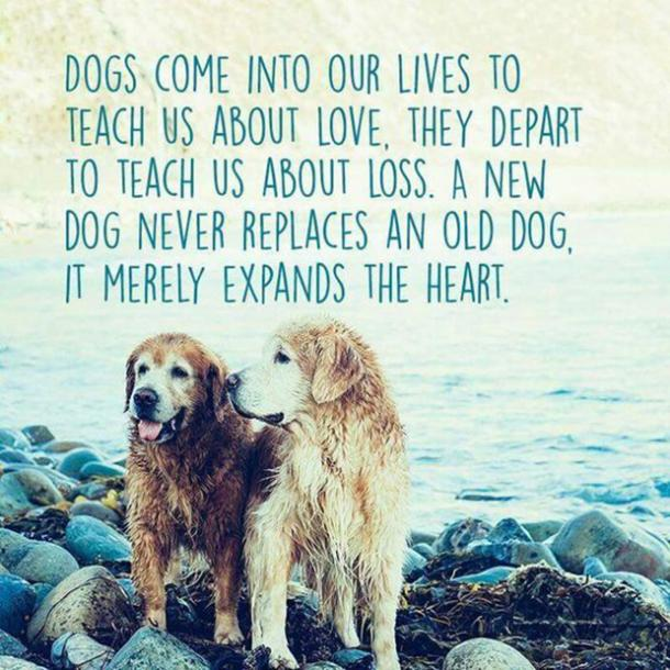 Quotes About Dog Friendship Pleasing 20 Quotes That Prove Dogs Are Truly  Womanu0027s Best Friend Yourtango