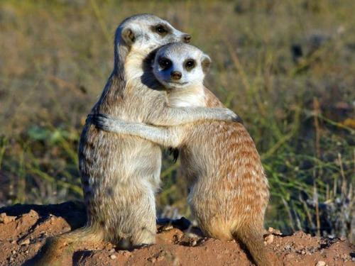 """<a href=""""http://movies.nationalgeographic.com/movies/meerkats/pictures/"""">nationalgeographic.com</a>"""
