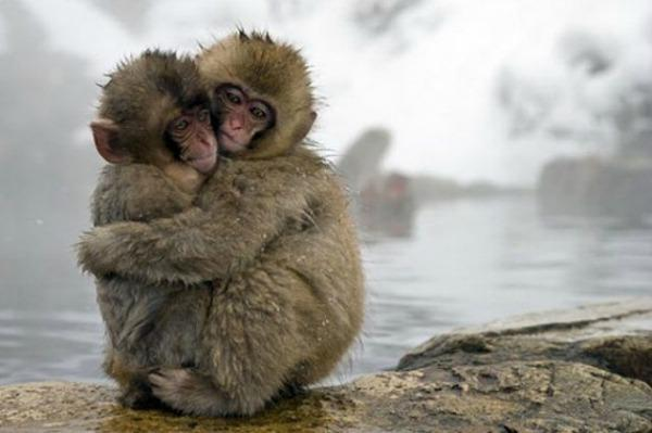 """<a href=""""http://greatinspire.com/20-beautiful-animals-love-photography/"""" target=""""_blank"""">greatinspire.com</a>"""