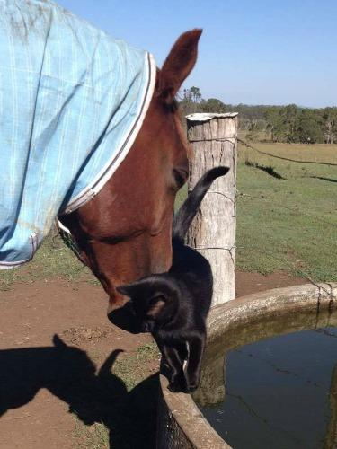 "<a href=""https://www.thedodo.com/horseback-riding-cat-loves-spe-575766527.html"" target=""_blank"">thedodo.com</a>"
