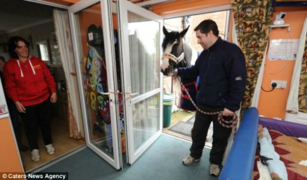 "<a href=""http://www.dailymail.co.uk/health/article-2649403/Its-understands-condition-Man-cerebral-palsy-epilepsy-visited-bedroom-beloved-HORSE-Tiger.html?ITO=1490&ns_mchannel=rss&ns_campaign=1490"" target=""_blank"">dailymail.co.uk</a>"