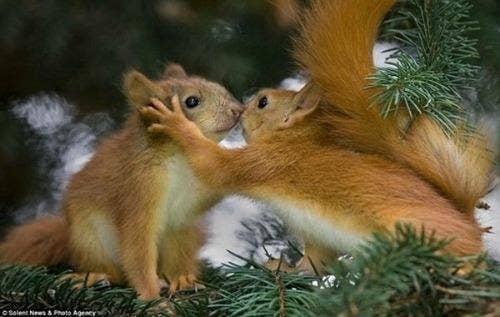 "<a href=""http://forum.xcitefun.net/beautiful-animals-romantic-photos-t57505.html"">forum.xcitefun.net</a>"