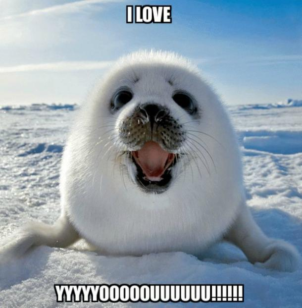 seal I love you meme