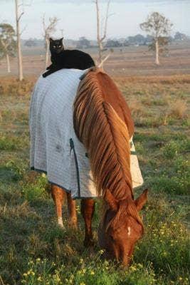 "<a href=""https://www.thedodo.com/horseback-riding-cat-loves-spe-575766527.html"" target=""_blank"">thedodo.com</a>"