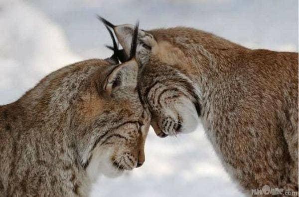 "<a href=""http://www.makemymood.com/content/adorable-animals-love-cute"" target=""_blank"">makemymood.com</a>"