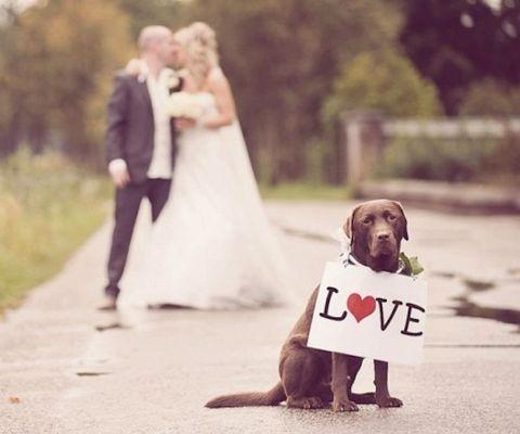 "<a href=""http://itsabrideslife.com/tag/dogs-in-wedding-ceremony-2013/"" target=""_blank"">itsabrideslife.com</a>"