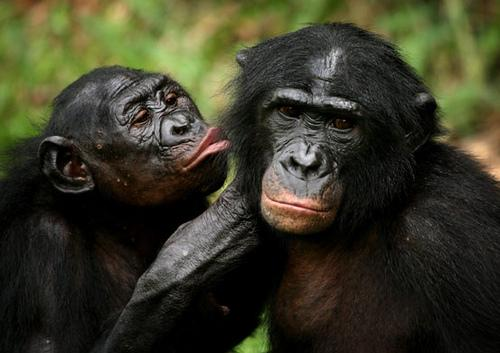 "<a href=""http://www.neatorama.com/2011/02/11/the-8-most-romantic-creatures-in-the-animal-kingdom/#!l3bHP"">neatorama.com</a>"