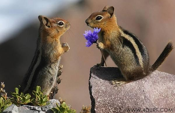 """<a href=""""http://www.topdreamer.com/animals-in-love-cute-animals-expressing-feelings/"""" target=""""_blank"""">topdreamer.com</a>"""