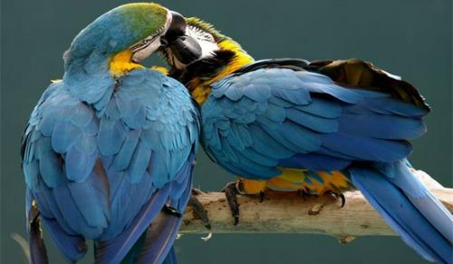 "<a href=""http://aibob.wordpress.com/2012/02/08/romantic-animal-photography-by-national-geographic/"">aibob.wordpress.com</a>"