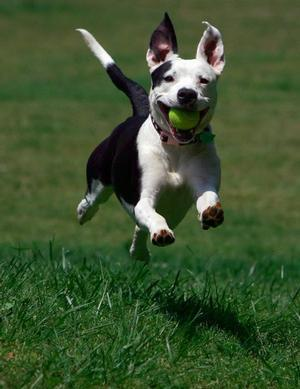 """<a href=""""http://www.independentmail.com/news/2008/apr/22/what-do-about-pit-bulls-vicious-dog-issue-anderson/"""">independentmail.com</a>"""