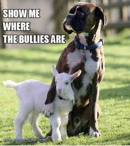"<a href=""http://endlesspicdump.com/dog-protecting-baby-sheep.html"" target=""_blank"">endlesspicdump.com</a>"