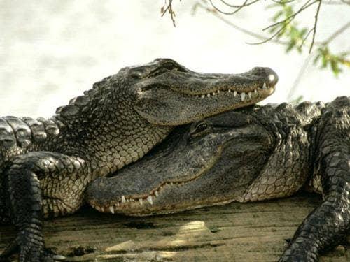 """<a href=""""http://www.fiboni.com/2013/04/top-10-most-romantic-animals/"""">fiboni.com</a>"""