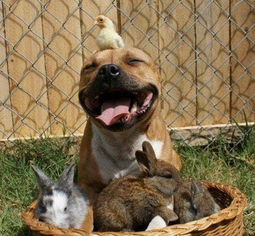 "<a href=""http://www.8entech.com/13-cute-pitbulls/"">8entech.com</a>"