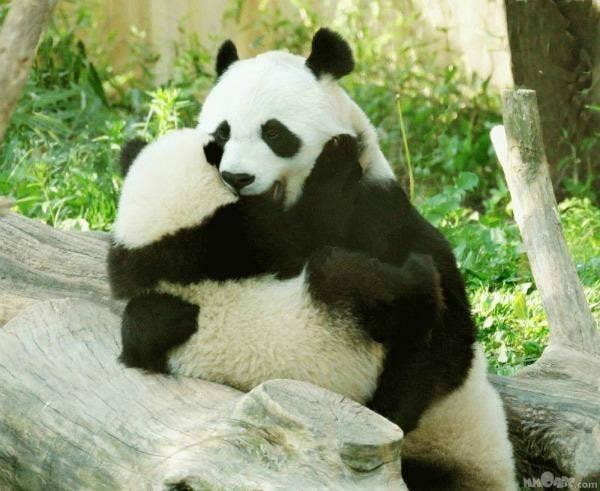 "<a href=""http://awesomew4llpapers.blogspot.com/2011/10/animals-in-love-panda-wallpaper.html"" target=""_blank"">awesomew4llpapers.blogspot.com</a>"
