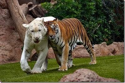 """<a href=""""http://funny-absurd.blogspot.com/2011/11/romantic-animals.html"""">funny-absurd.blogspot.com</a>"""