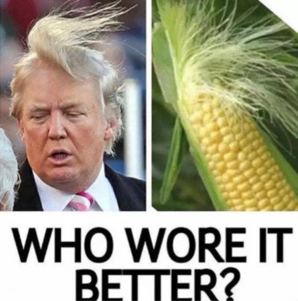 best Donald Trump hair meme