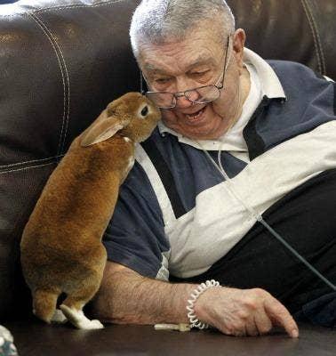 "<a href=""http://www.daytondailynews.com/photo/news/bunny-therapy/pqZNQ/"">daytondailynews.com</a>"