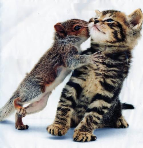 "<a href=""http://www.tumblr.com/tagged/animal-kiss"">tumblr</a>"