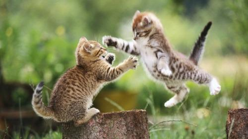 """<a href=""""http://www.wallcg.com/cats-animals-jumping-outdoors-kittens-38657/"""">wallcg.com</a>"""