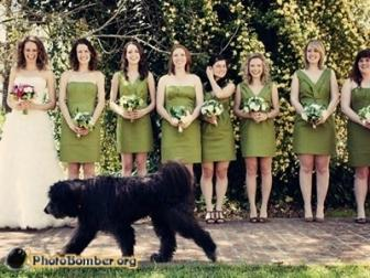"""<a href=""""http://www.photobomber.org/tags/wedding"""">photobomber.org</a>"""