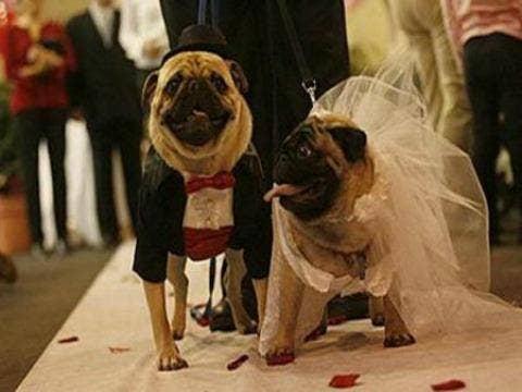 "<a href=""http://www.designswan.com/archives/interesting-photos-of-animal-wedding.html"">designswan.com</a>"