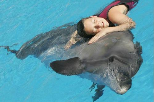 """<a href=""""http://www.globalpost.com/photo/5819694/therapy-animals-5-1"""">globalpost.com</a>"""