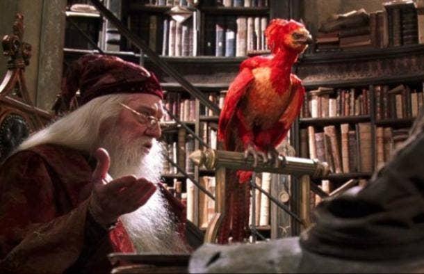 Fawkes Dumbledore Harry Potter