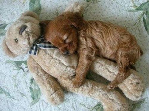 "<a href=""http://socialitelife.com/photos/cute-overload-35-dogs-cats-snuggling-photos/cats-dogs-snuggling-12072011-33"">socialitelife.com</a>"