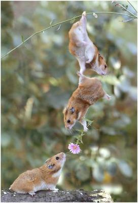 """<a href=""""http://jatim.org/funny-event/collection-of-photographs-how-the-animals-to-show-her-feelings/attachment/romantic-animal/"""">jatim.org</a>"""