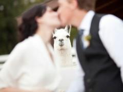"<a href=""http://weknowmemes.com/wp-content/uploads/2012/10/llama-wedding-photobomb-240x180.jpg"">weknowmemes.com</a>"