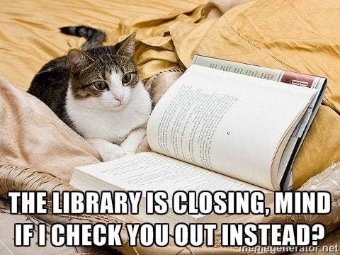 mindblowingcats.tumblr.com, https://twitter.com/michot_y/status/385412098026913792