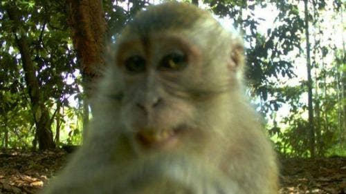 "<a href=""http://www.mandatory.com/2013/04/04/the-best-animal-selfies-to-ever-grace-the-internet/1"">mandatory.com</a>"