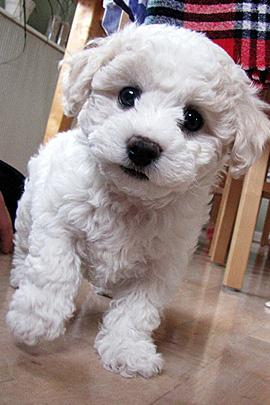"""<a href=""""http://thedesigninspiration.com/articles/50-adorable-animals-to-melt-your-heart/"""">thedesigninspiration.com</a>"""