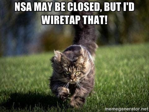 mindblowingcats.tumblr.com, https://twitter.com/_StarrHall_/status/385446170773815298