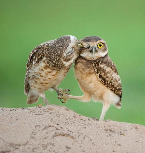 "<a href=""http://www.tumblr.com/tagged/animals-kissing"">tumblr</a>"
