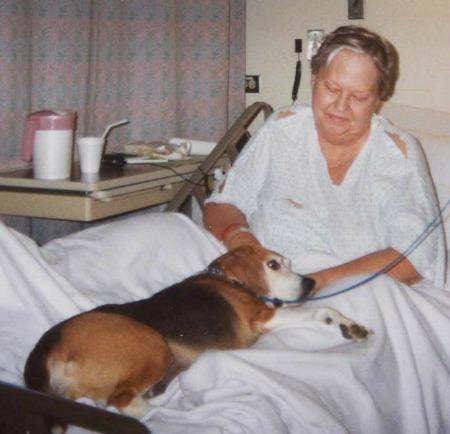 "<a href=""http://www.hscalumet.org/pet-therapy.asp""> hscalumet.org </a>"