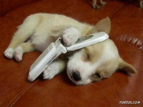 """<a href=""""http://www.funzug.com/index.php/wildlife/cute-animals-sleeping.html"""">funzug.com</a>"""