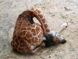 "<a href="" http://isatv.com/lifestyle/awkward-animals-vs-real-animals/"">isatv.com</a>"