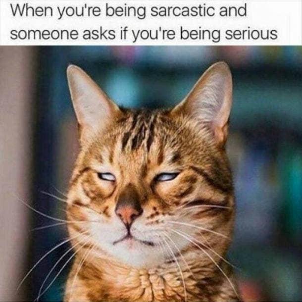 Aquarius sarcastic zodiac signs