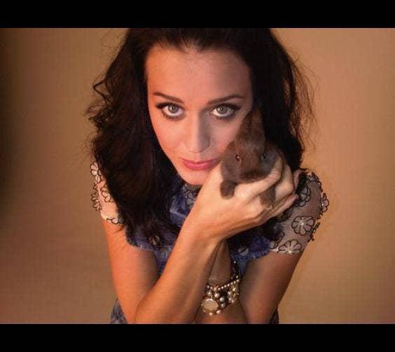 Katy Perry & Her Bunny, Abracadabra