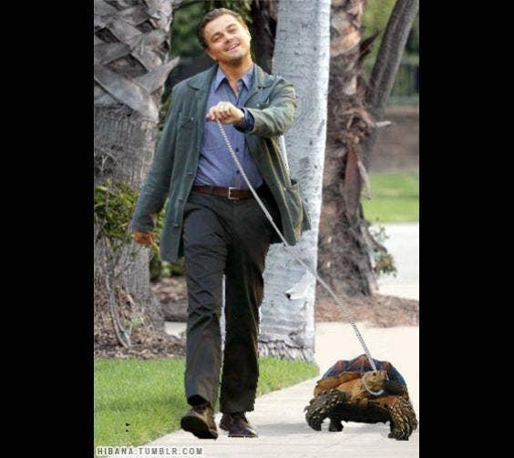Leonardo DiCaprio & His Tortoise