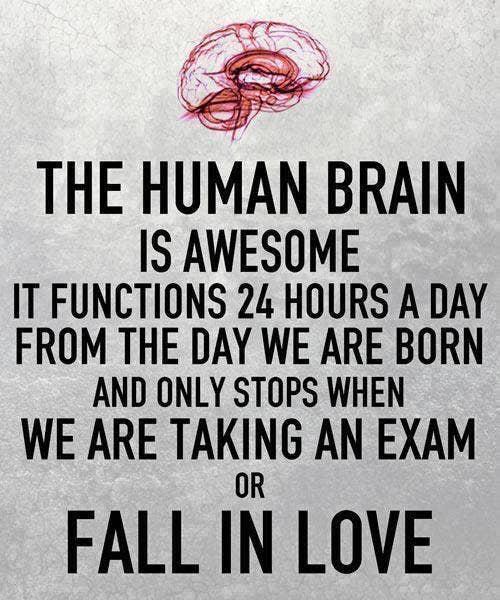 human brain on love meme