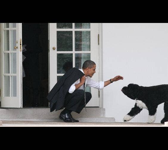 President Obama & His Dog, Bo