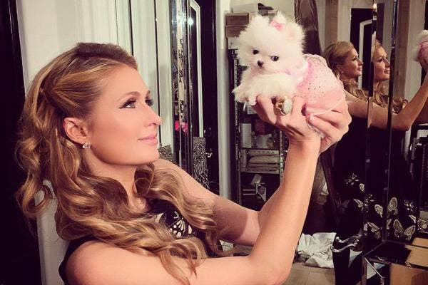Paris Hilton, Paris Hilton Instagram, Paris Hilton dog, Paris Hilton dogs, Paris Hilton pets, Paris Hilton boyfriend, Paris Hilton dating, Paris Hilton Paris Latsis, Paris Hilton River Viiperi, Paris Hilton love, Paris Hilton sex tape, Paris Hilton slut,