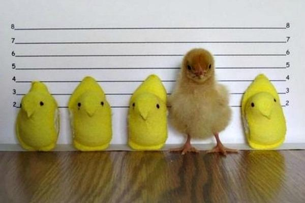 Peeps used to fly.