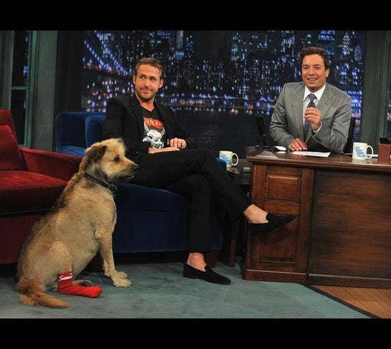Ryan Gosling & His Dog, George